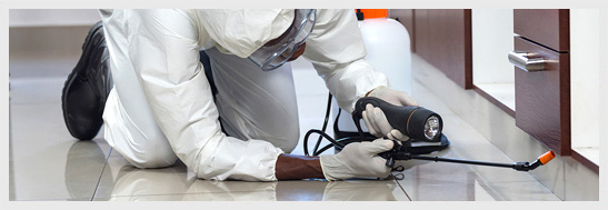 Corporate and Office Pest Control London